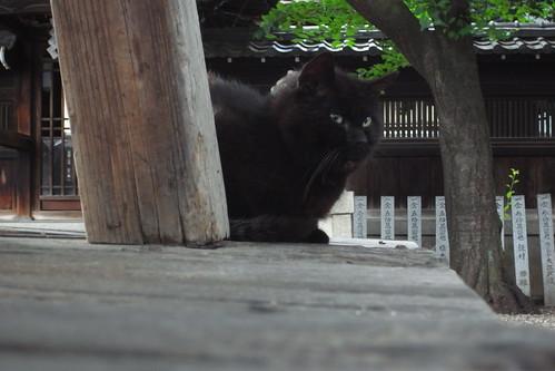 Today's Cat@2010-06-22