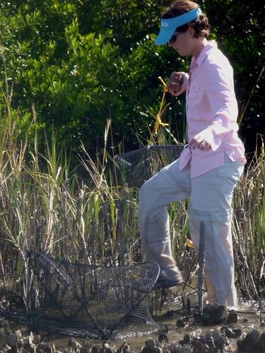 Randall places traps on a Cedar Key reef