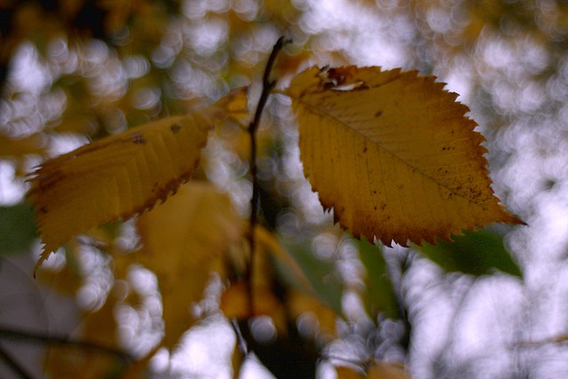 autumn leaves, sw 2nd