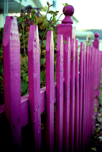 Fence Friday [Pink] ~Explored~