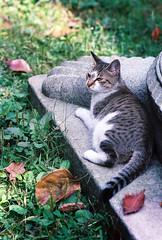 Stray cat (Yunhyok Choi) Tags: cat kitten fuji pentax superia kitty 400 stray xtra fujicolorsuperiaxtra400 z1p