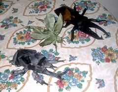 Samurai, Hurcules, Beetle & Grasshopper (PhillipWest) Tags: origami paperfolding papiroflexia