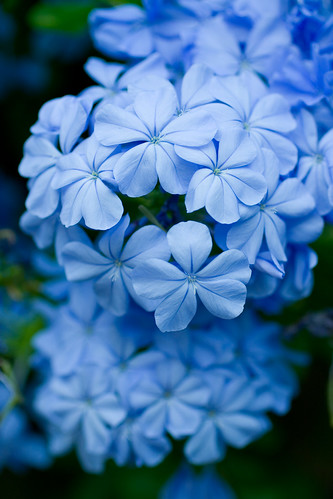 The Loveliest Shade of Blue I've Ever Seen in Nature!