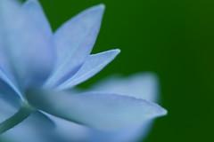 七段花 - by hichako