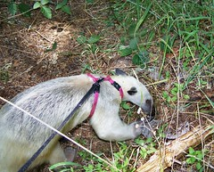 Pua finds ants on her walk