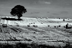 SUNSHINE AND SHADOW (Edward Dullard Photography. Kilkenny, Ireland.) Tags: kilkenny ireland blackandwhite bw irish field landscape scenery photographic eire emeraldisle dullard superbmasterpiece blackribbonbeauty edwarddullard kilkenny1953 cillchainnaigh societyedward
