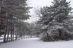 Fresh Snow Fall (Tony Dornacher) Tags: winter snow illinois lakeforest lakeforestcollege tonydornacher anthonydornacher
