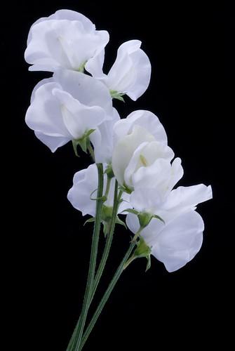 Flowers photo 18