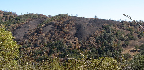 Fire damage across the canyon