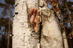 (mioke) Tags: hand hole fingers bark birch