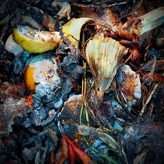 The State of Things 03 (Anandamide) Tags: food orange fruits vegetables fruit lemon fungus organic waste scraps rotten compost decomposition mouldy spoilage putrid fungal perishable giulianococco