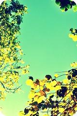 branches above (DorkyMum) Tags: city autumn trees urban orange brown tree fall nature leaves yellow outside outdoors scotland leaf edinburgh outdoor meadows autumncolours urbannature fallcolours