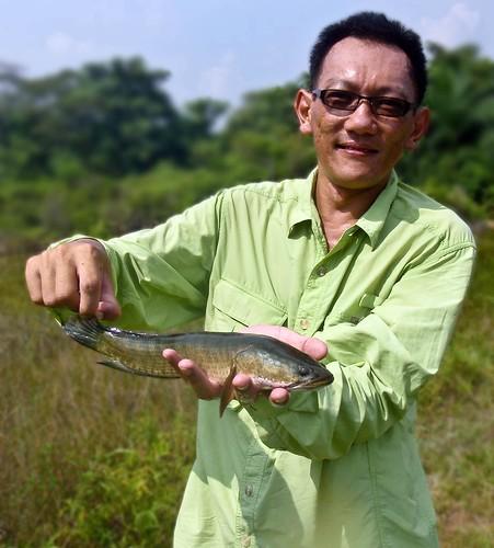 Haruan fishing