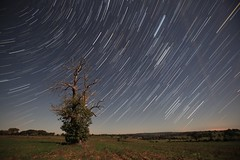 Orion star trails (Wilfried.B) Tags: longexposure motion france tree nature field stars landscape nightshot earth bretagne explore orion rotation frontpage nuit lonetree startrails etoiles illeetvilaine explored canonef1635mmf28lusm orionids Astrometrydotnet:status=failed canon5dmarkii wilfriedb Astrometrydotnet:id=alpha20101126195928