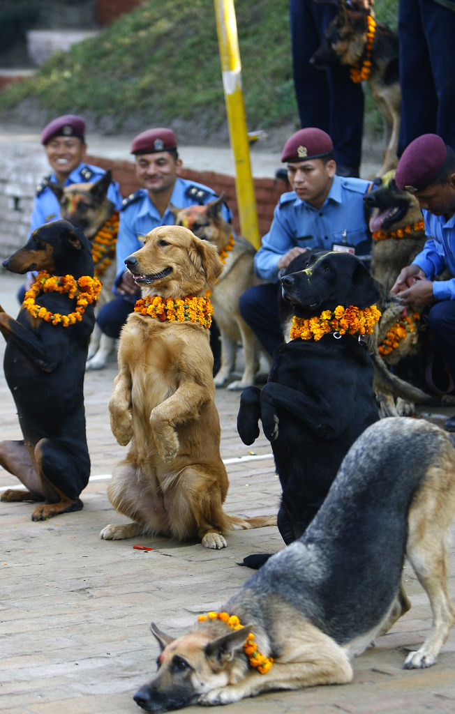 Diwali dogs in Nepal