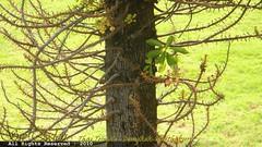 วัดต้นเชือก นนทบุรี