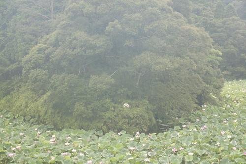 JC0805.010|宮崎県西都市 PG1.0#