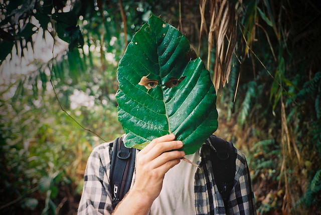 joulio & the giant leaf