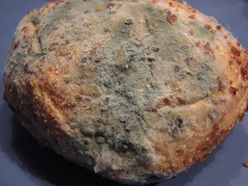 moldyroll
