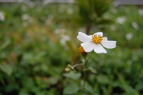 有故事的小花