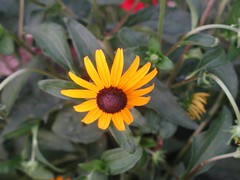 nature walk3 8-7-07 (themeowy) Tags: flower macro nature naturewalk