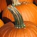 Pumpkin Stem