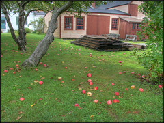 Windfall (Dave Delay) Tags: newhampshire nh apples portsmouthnh hdr 3xp strawberybanke