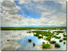 Flower Lake with float grass - nature flower watcher lake hdr beautyisintheeyeofthebeholder wetraveltheworld flowerlake *eye* world beautifulcapture china
