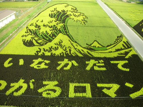 2007.8.27 #32  田んぼアート