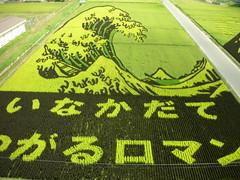 2007.8.27 #32   (teda15) Tags: green field japan rice aomori inakadate