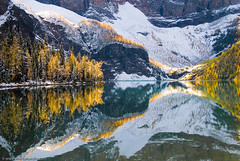 Taylor Lake Larches (Marc Shandro) Tags: autumn lake mountains reflection fall alberta taylor larch banffpark