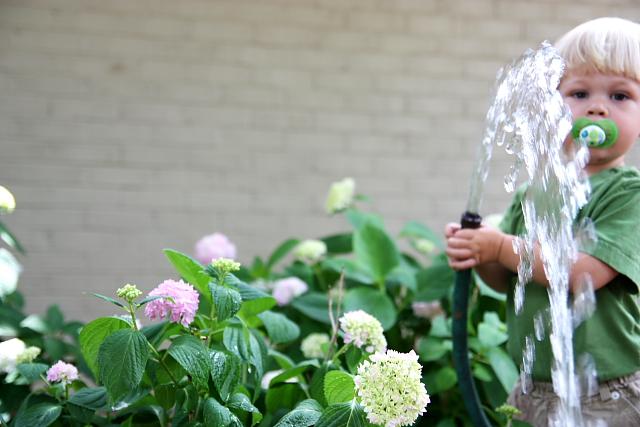 gardener2
