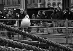 indifference... (smile-ik) Tags: people ny newyork seagull crowd southstreetseaport seaport