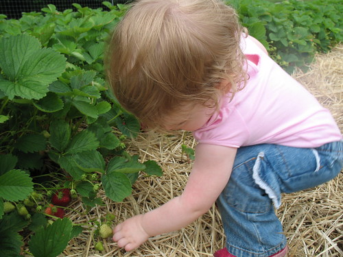 Picking Strawberries 2