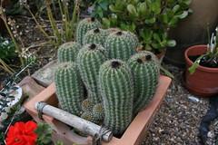 Cactus - Canon EOS 400D
