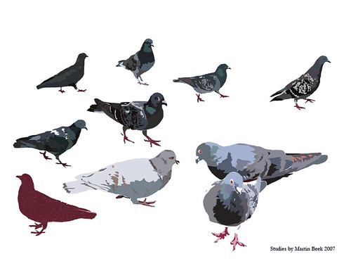 Pigeons Drawing For An Illustration I Ve Had To Draw Abou Flickr