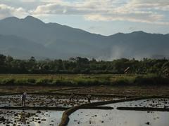 muang sing 5 (mook elliott) Tags: asia southeastasia rice laos mountians ricepaddy muangsing northernlaos
