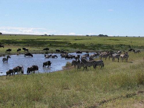 Serengeti watering hole