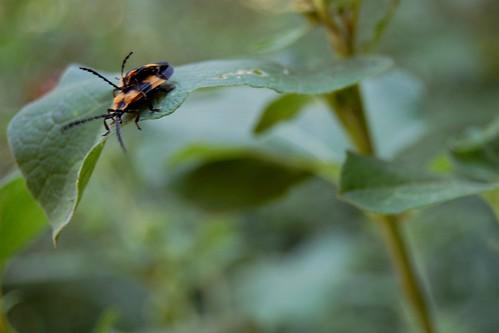 bugs do it - 3