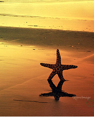 Bright Starfish (Rareimage Photography) Tags: ocean california usa nature beauty closeup bravo superb starfish poe soe naturesfinest supershot flickrsbest anawesomeshot impressedbeauty ultimateshot isawyoufirst goldenphotographer diamondclassphotographer flickrdiamond megashot ysplix excellentphotographerawards flickrelite theunforgetablepictures rareimagephotography theperfectphotographer thegardenofzen