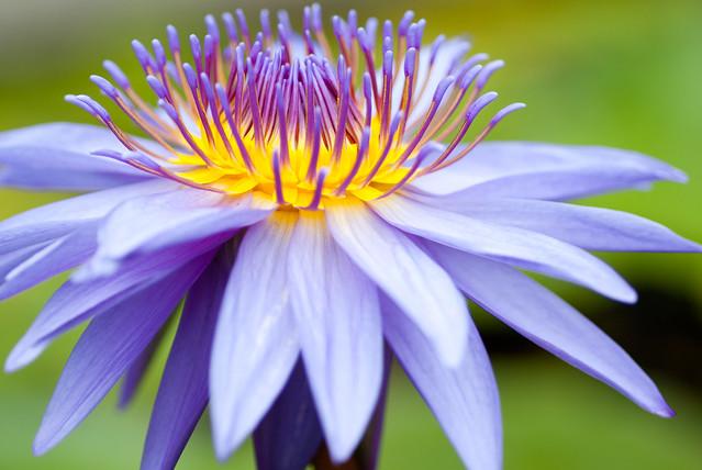 自己家裡種的花草