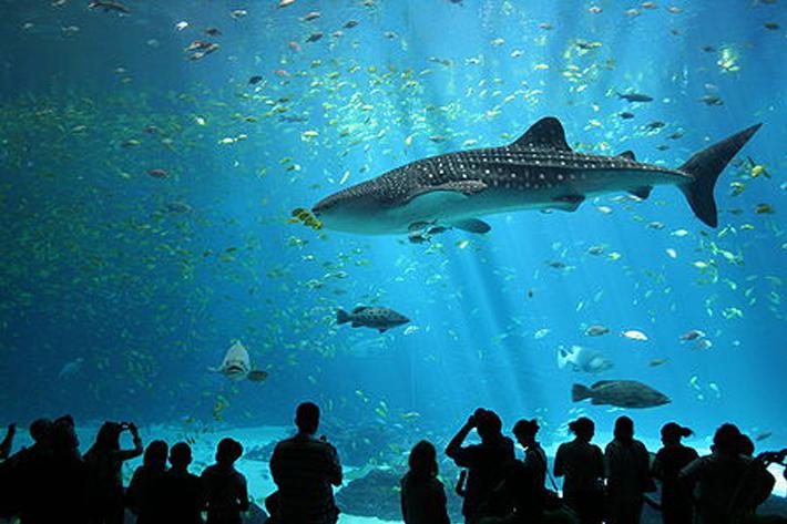 110310_aquarium02