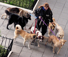Taken for a walk / De paseo ( Popotito ) Tags: street winter woman dog cold dogs female avenida calle mujer can perro walker canes caminar perros invierno leash avenue coolest frio dogwalker caminadora