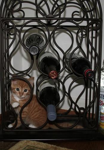May i get madame a nice glass of sauvignon blanc?