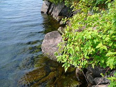 P1030613.jpg (airwaves1) Tags: 1000islands stlawrenceriver july282007 yeoisland