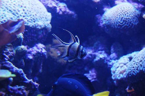 Fish at Skansen Aquarium