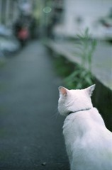 Come #1 (holy) Tags: road leica white cat bokeh parade come mp  summilux         parade100 50142nd