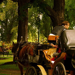 Un tour de calche? / A horse-drawn carriage tour? (Denis Collette...!!!) Tags: park morning horse canada tree walking cheval photography photo bravo photographie tour ride lumire september photograph qubec promenade huge elm arbre parc septembre marche ville orme matin photographe calche deniscollette qubeccity quebeccity parcsaintejeannedarc villedequbec horsedrawncarriagetour horsedrawncarriage horsedrawn tourdecalche world100f