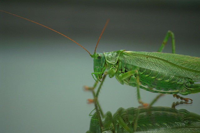 PICT9461_grasshopper