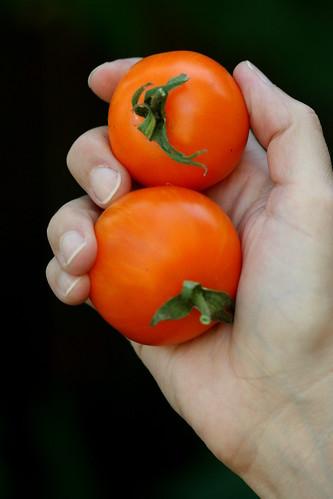 tomato AAA sweet solano
